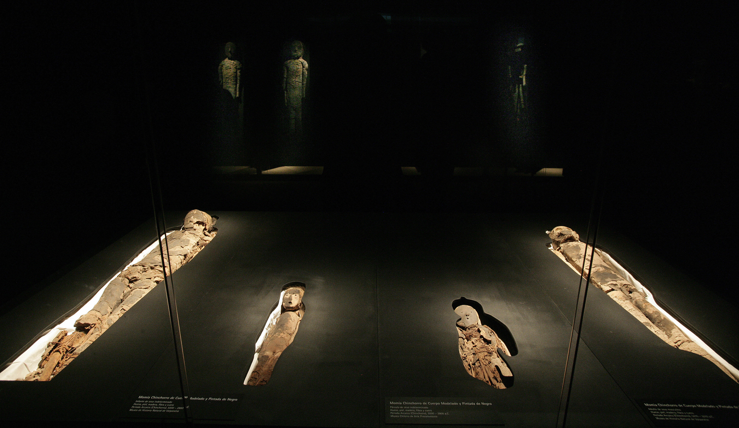 A group of Chinchorro mummies — dated between 5000 B.C. and 3000 B.C. — are on display during the exhibition  Arica, a Thousand-Year-Old Culture,  on Aug. 27, 2008, in the cultural center of the La Moneda presidential palace in Santiago, Chile