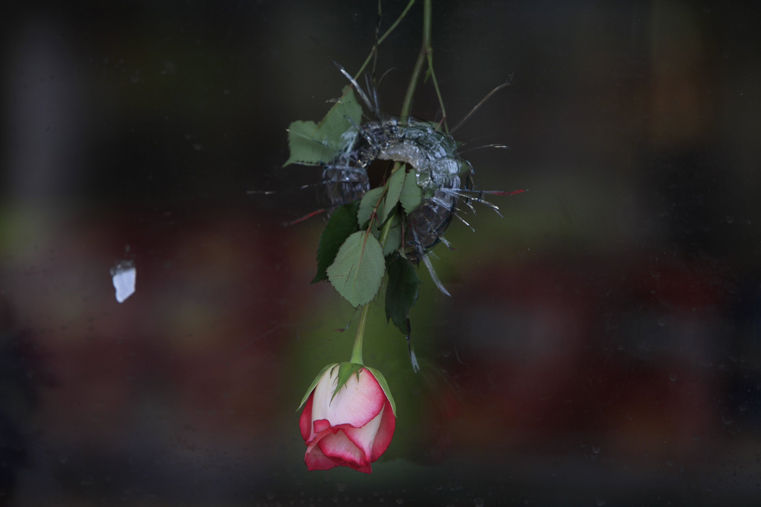 May 25, 2014. Flowers hang in the bullet holes in the window of the I.V. Deli Mart in Isla Vista. The market was the scene of part of a shooting rampage Friday night that left seven dead including the shooter.