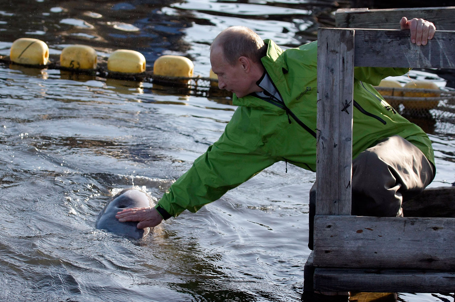 Putin strokes a beluga whale named Dasha at a conservation facility in Khabarovsk, July 31, 2009.