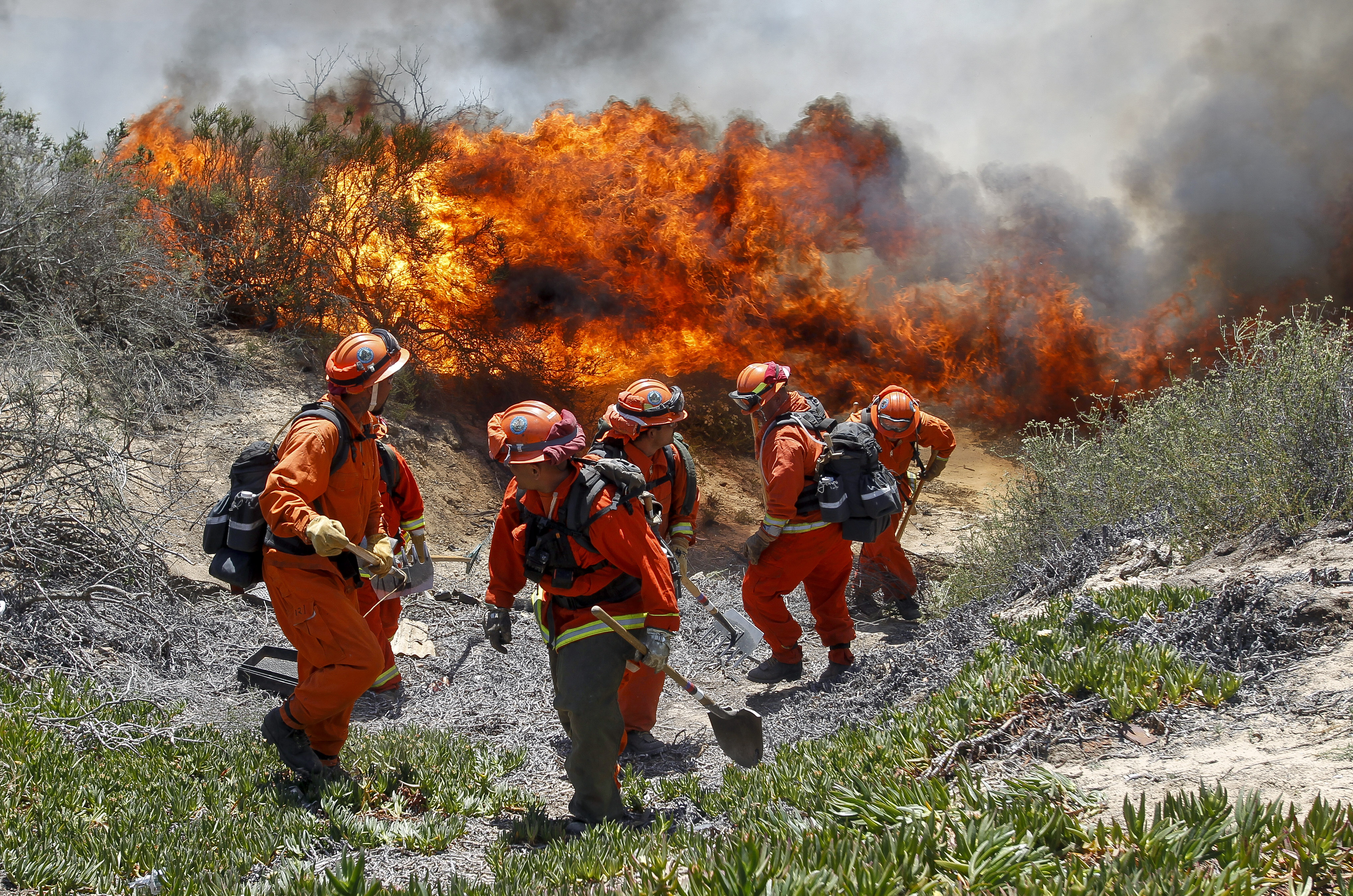 Inmates from Oak Glen Fire Camp in Riverside retreat to higher ground as the flames start to move close while they work to control the fire near Oriole Court in Carlsbad, Calif. on May 14, 2014.