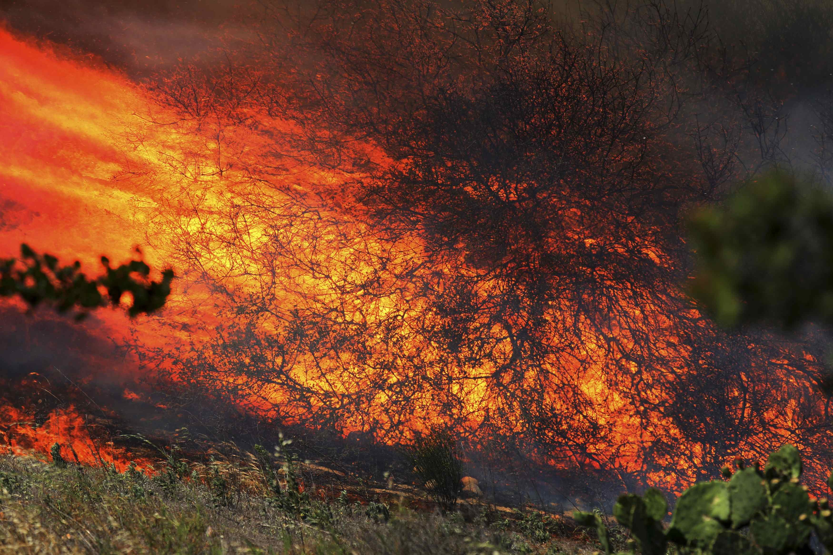 A bush is fully engulfed in flames near San Diego on May 13, 2014.