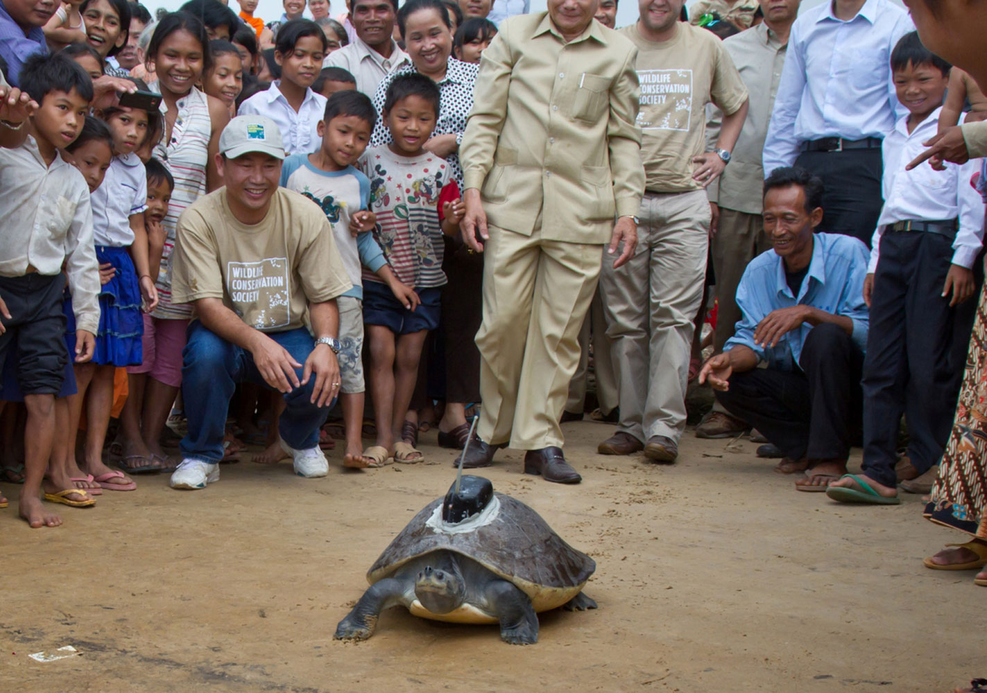 A 75-lb (34-kg) southern river terrapin waddles on sand as it is released near the Sre Ambel river in Cambodia. There are less than 200 of these turtles left in the wild. This one has a transmitter that will allow conservationists to track it.