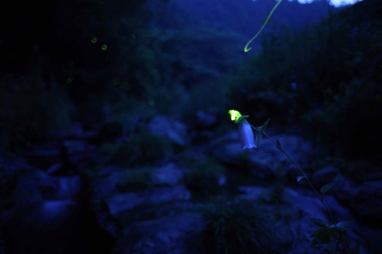 A firefly at dusk.