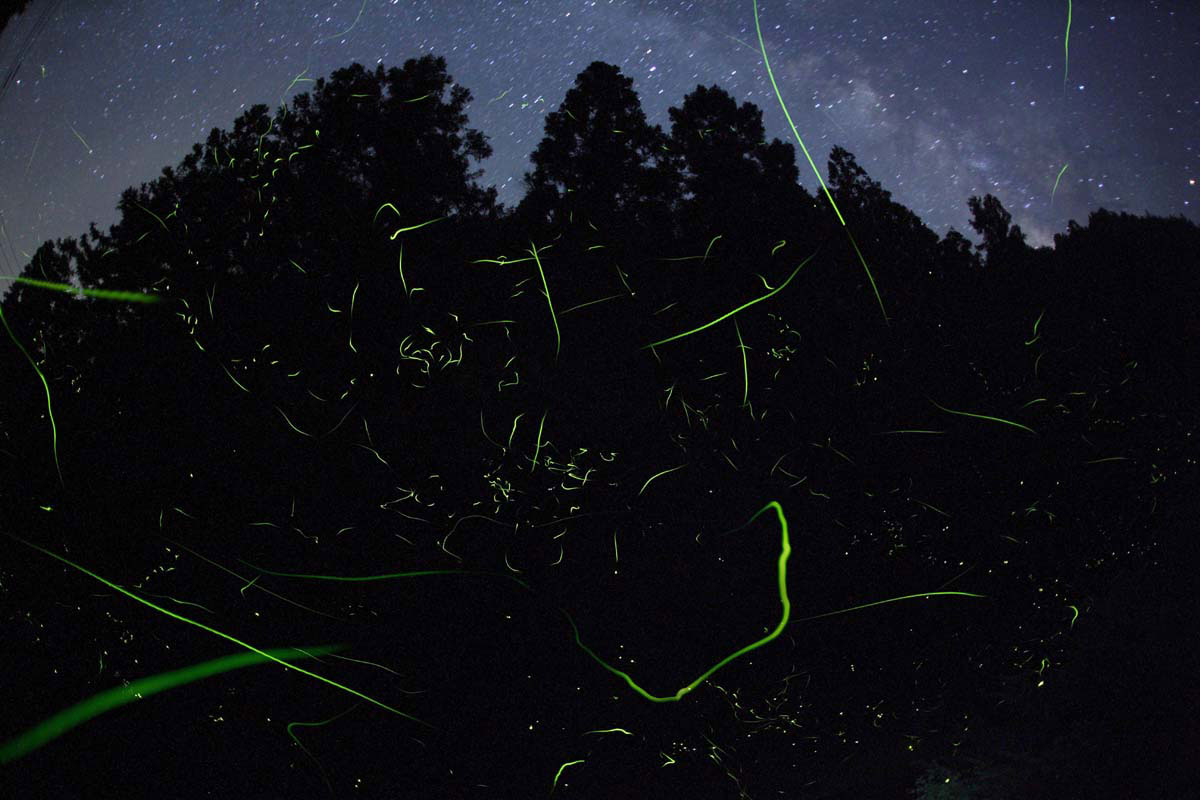 Fireflies in the woods and the milky way.
