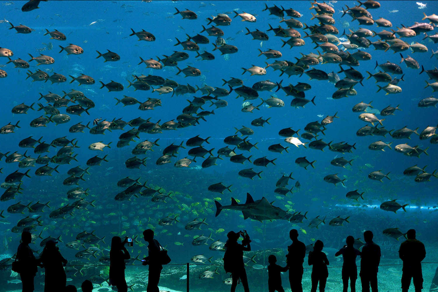 Visitors look at fish in the aquarium inside the Chimelong Ocean Kingdom in Zhuhai on April 29, 2014.