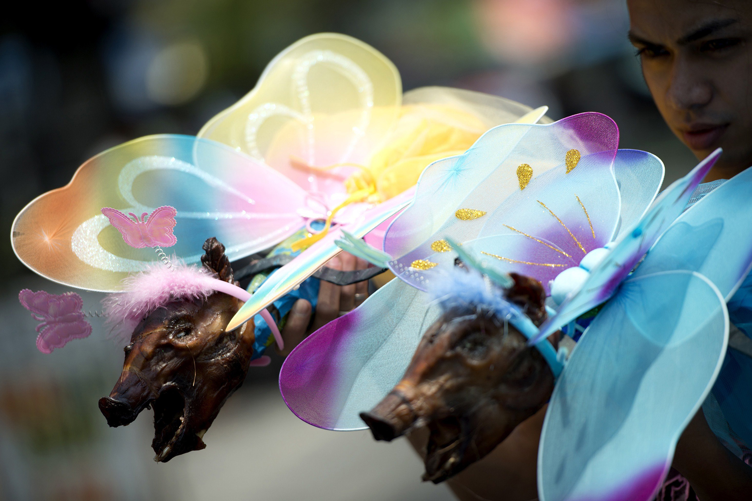 A worker holds two roasted pigs dressed as fairies which will be paraded through the La Loma district of Manila on May 18, 2014, as part of an annual festival.