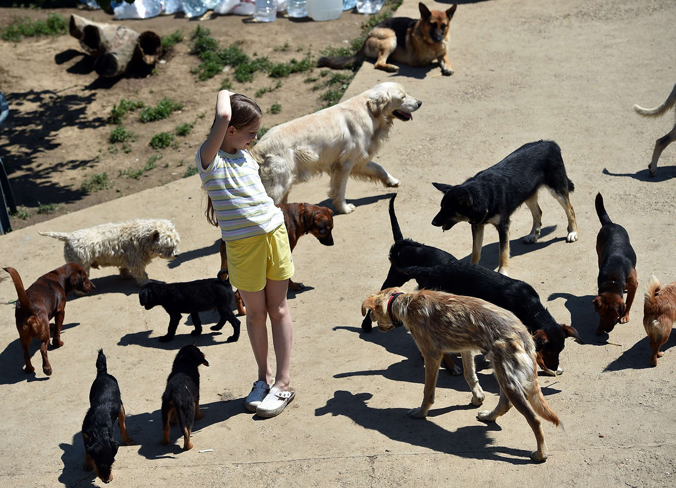 A child plays with rescued dogs in an animal shelter in the village of Drazevac near the flooded Serbian town of Obrenovac, on May 21, 2014.
