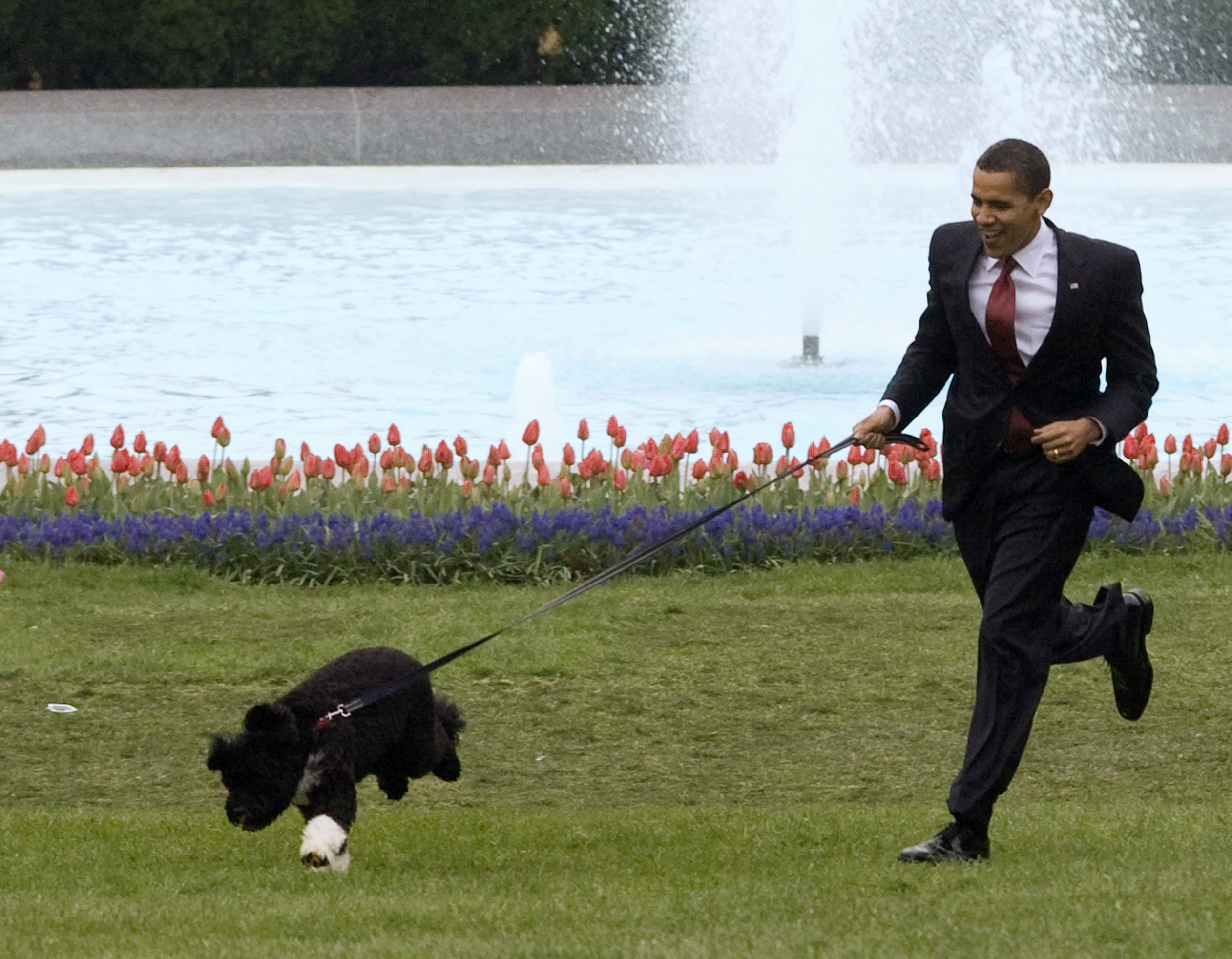 U.S. President Barack Obama presents the first family's new Portuguese Water Dog puppy, Bo, on the South Lawn at the White House in Washington on April 14, 2009.