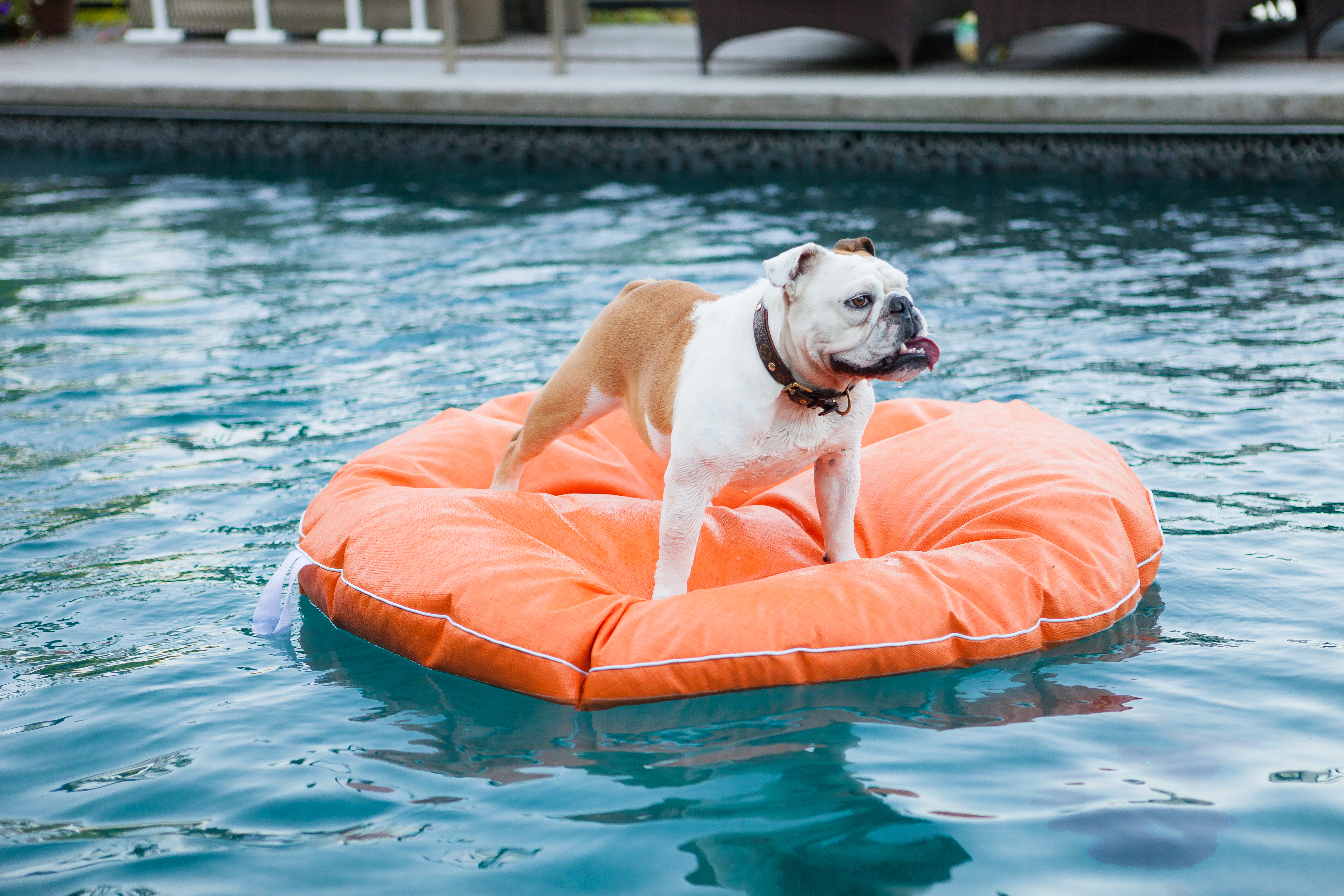 Dogs Only Swimming Pool Opens In Spain