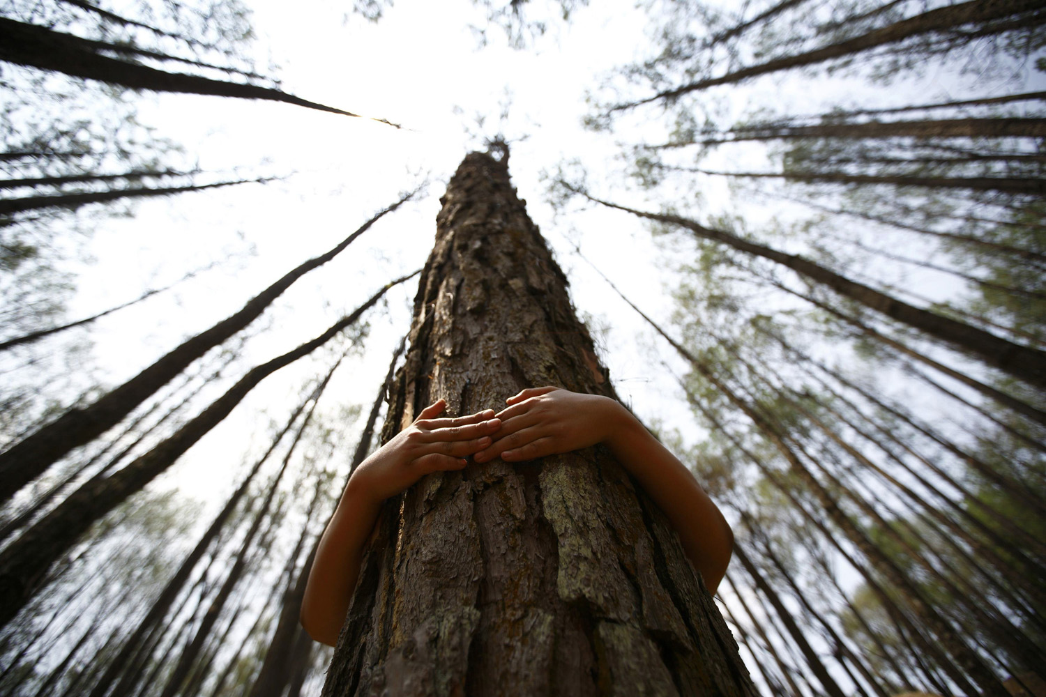 June 5, 2014.  A boy hugs a tree as he prepares to take part in an attempt to break the Guinness World Record for the most number of people hugging trees for two minutes in Kathmandu.