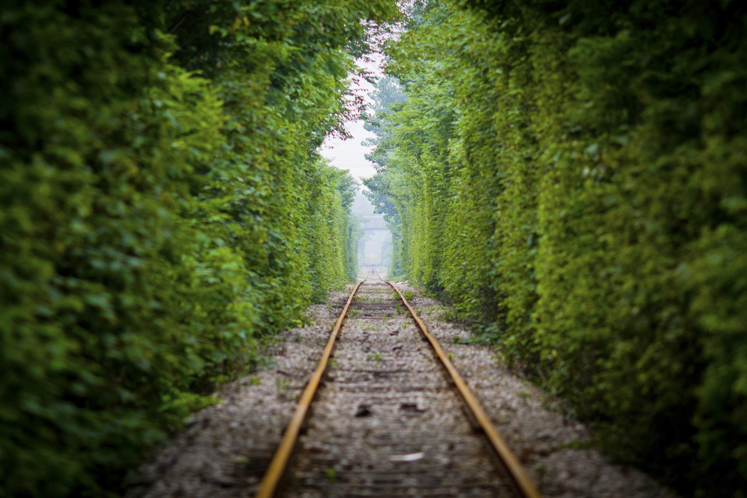 Jun. 15, 2014. A resident walks along a railway track surrounded by trees on both sides, in Nanjing, Jiangsu province.