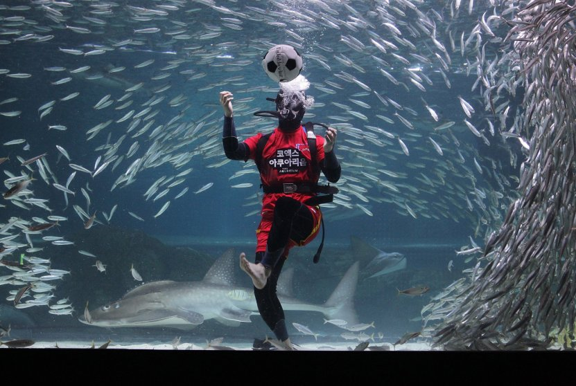 BESTPIX South Korean Divers Root For Their Team For 2014 FIFA World Cup