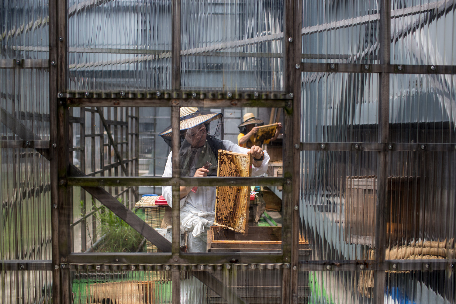 Jun. 17, 2014. Beekeeper Yamamoto Maoko removes bees from a frame at the rooftop bee hives of the Ginza Honey Bee Project in Tokyo, Japan.