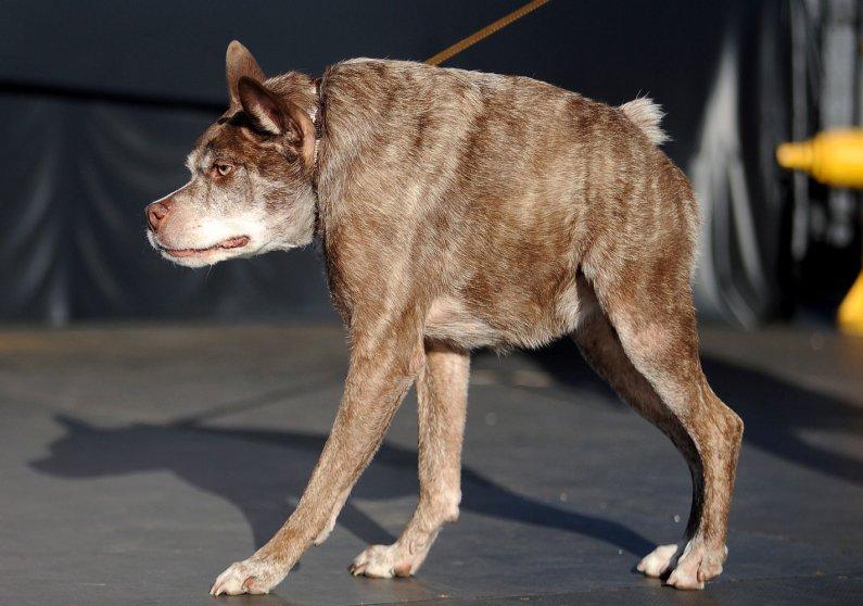 US-ANIMAL-DOG-UGLIEST