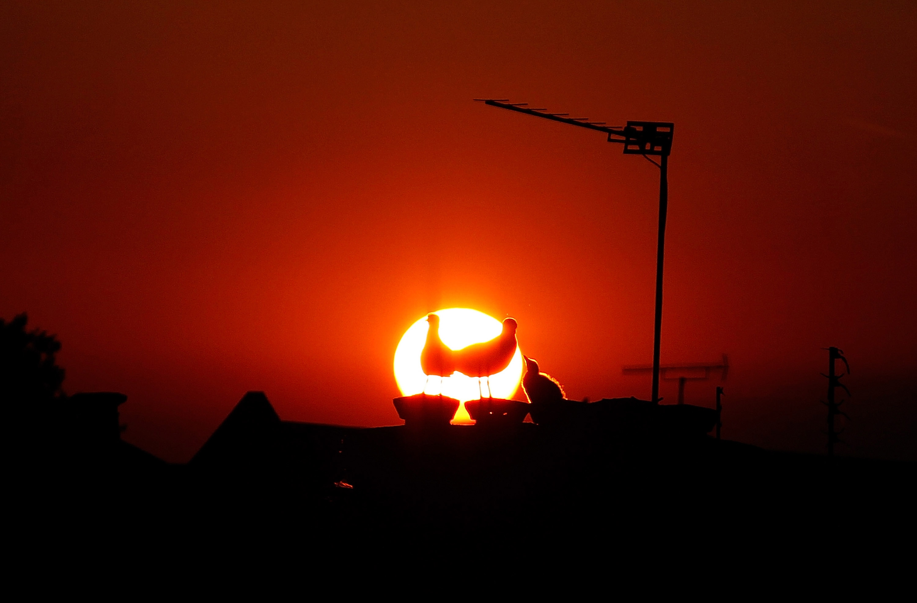A family of seagulls are silhouetted on the rooftops of Peckham as the sun goes down