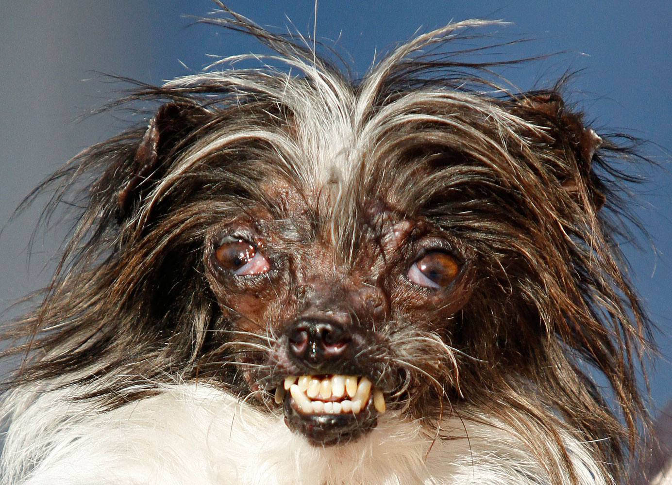 World's Ugliest Dog: A 2-Year-old Burn Victim Named Peanut | Time.com