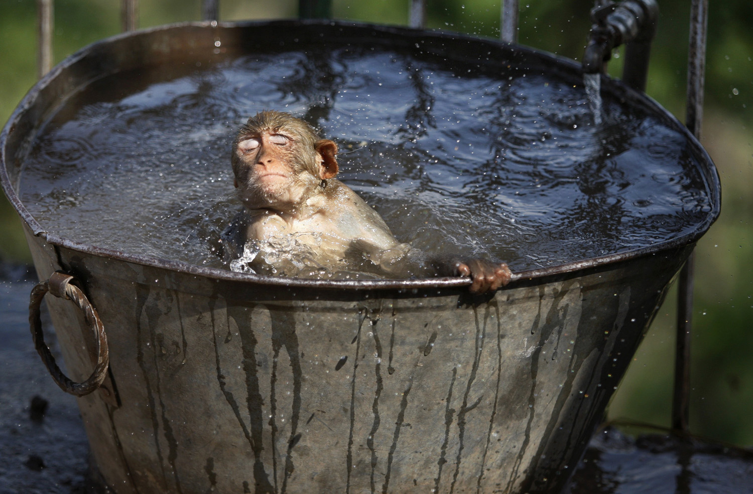 A monkey cools off in a water tub in the premises of a Hindu temple on a hot summer afternoon in Jammu, India, June 11, 2014.