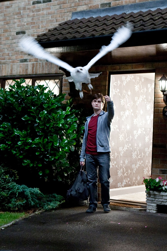 Daniel Radcliffe portrays Harry Potter with Hedwig the Owl in a scene from  Harry Potter and the Deathly Hallows: Part 1.