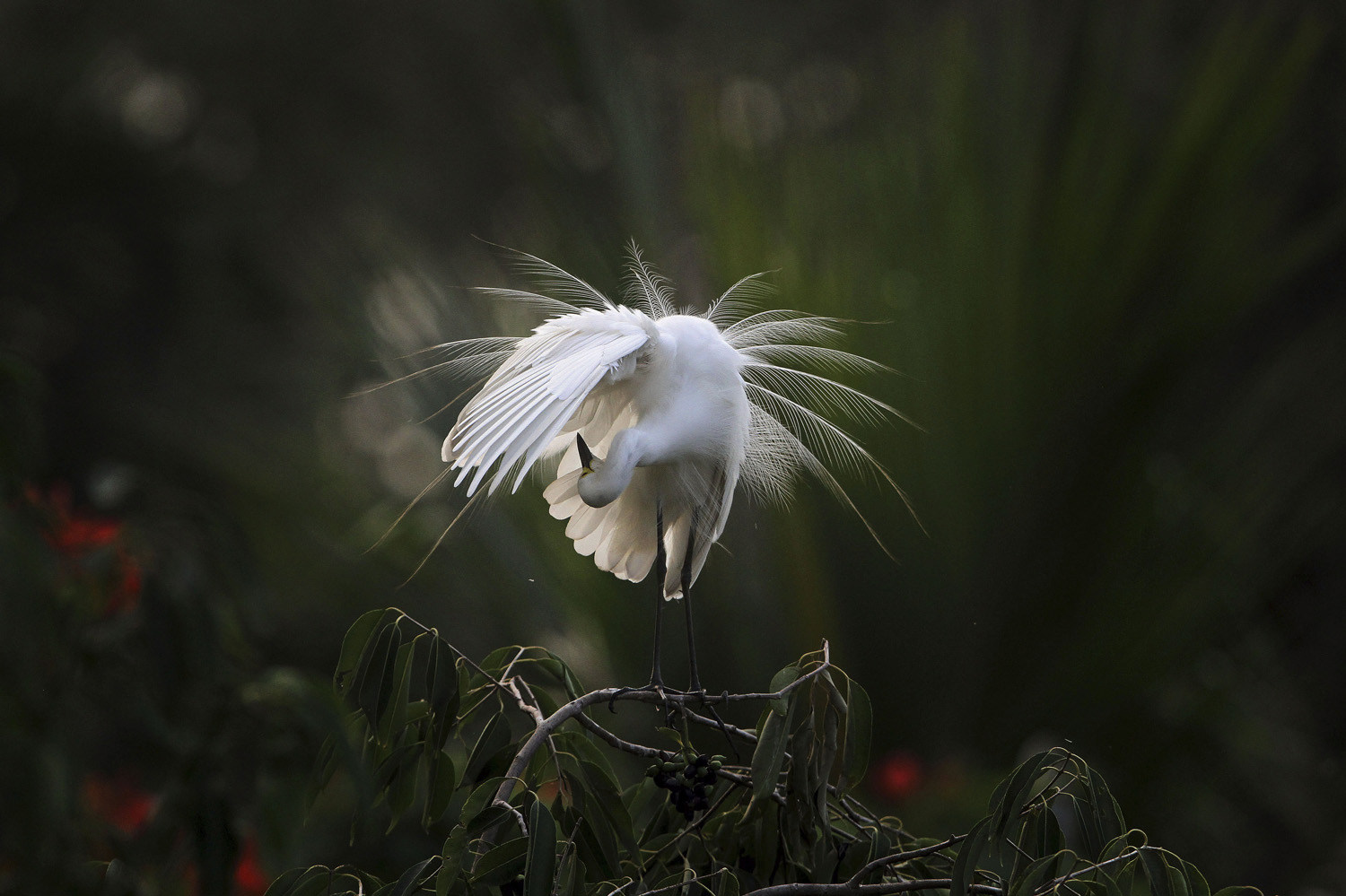 An egret preens itself as it stands on a branch along the River Brahmaputra on the eve of World Environment Day in Gauhati, India on  June 4, 2014.