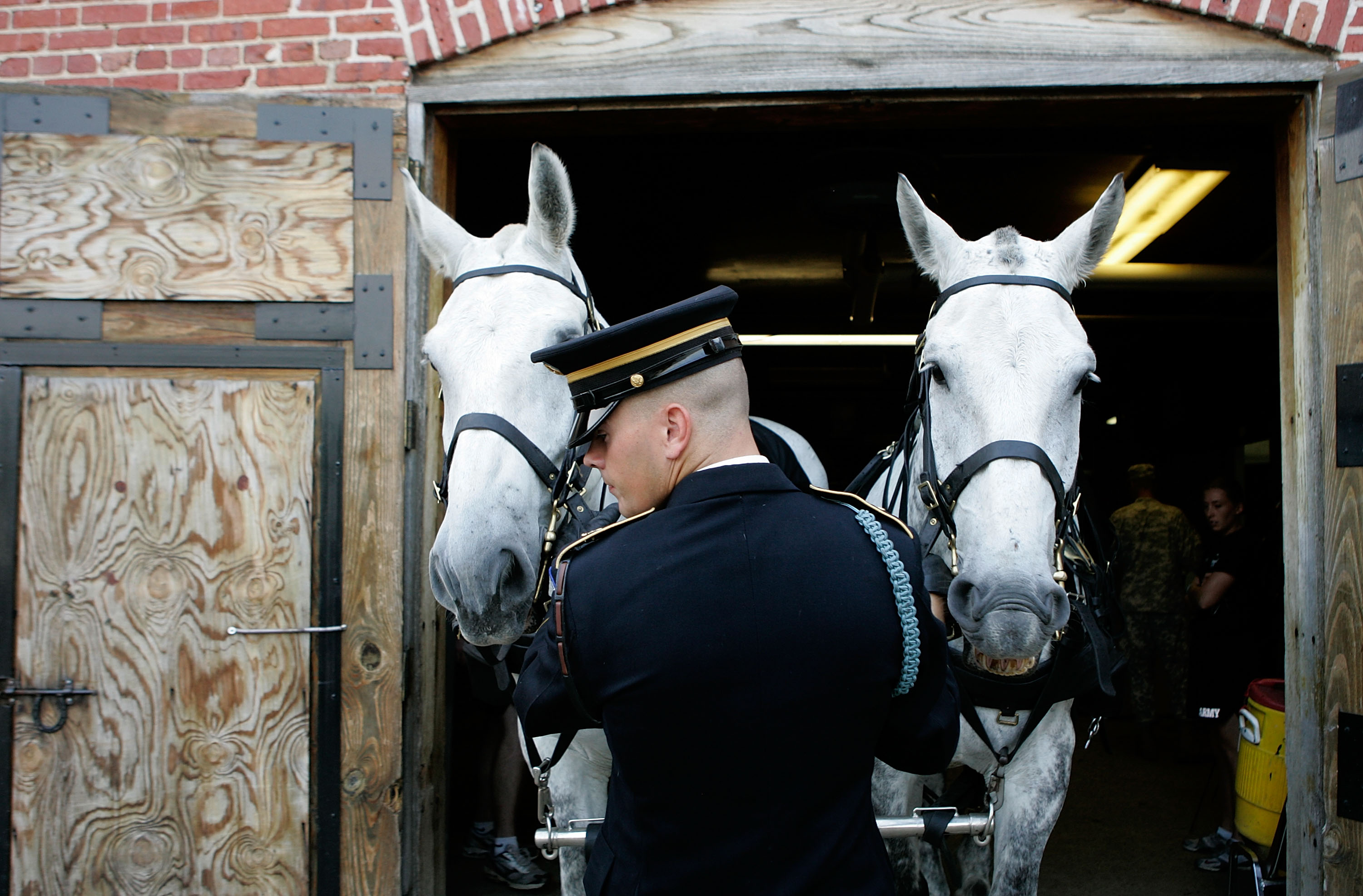 "Horses ""Sam"" (R) and ""Sarge"" are walked out of the stable by Spl. John Thomas of the U.S. Army 3rd Infantry Regiment ""Old Guard"" Caisson Platoon at Ft. Myer, before being hooked to a Caisson for funerals at Arlington Cemetery, Va., June 18, 2007."