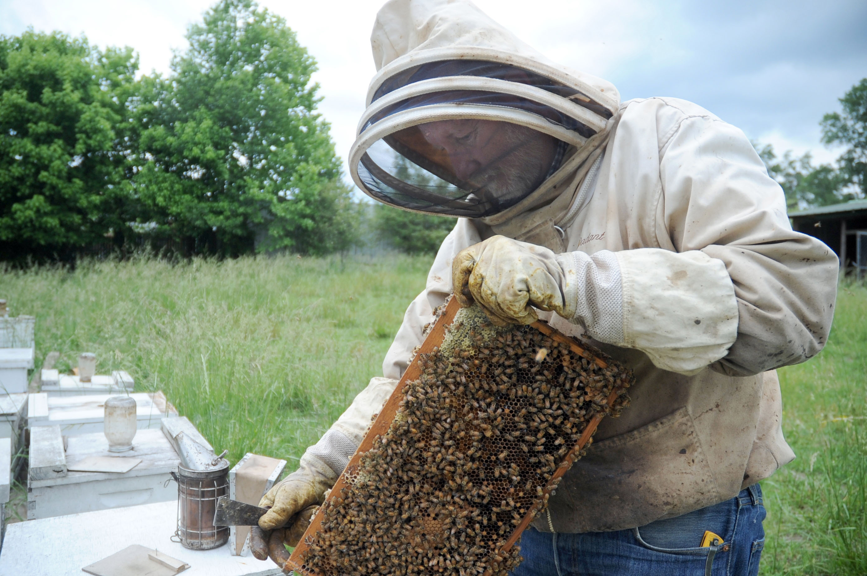 Beekeeper Alan Clingenpeel shows the inside of a bee hive in his apiary at his home on May 23, 2014 in Pearcy, Ark.