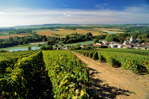 The Ay commune in France's Champagne region, where grapes are harvested to make  Moet et Chandon.