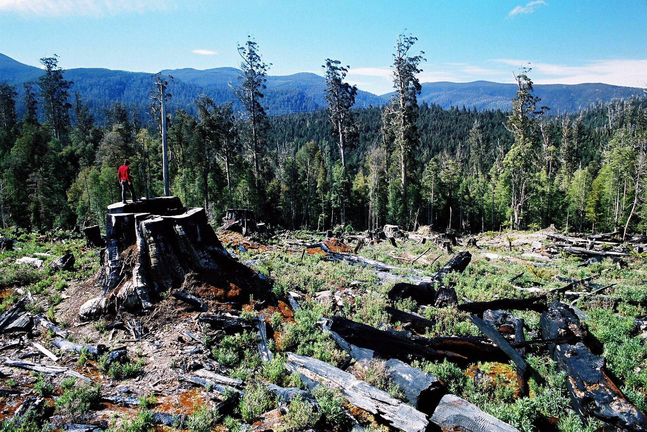An area of Tasmania's Styx forest after logging has taken place on Nov. 12, 2003.