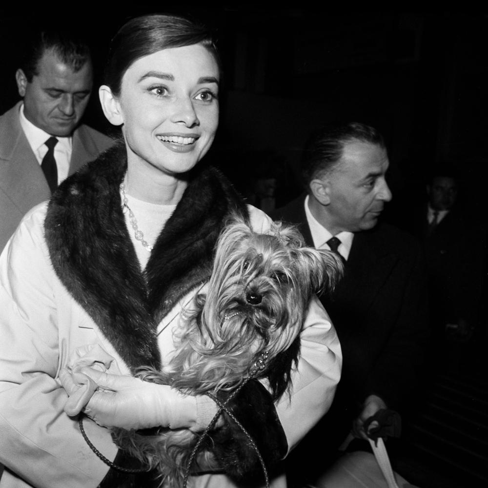 Actress Audrey Hepburn arrives at Fiumicino Airport, Rome in 1958.
