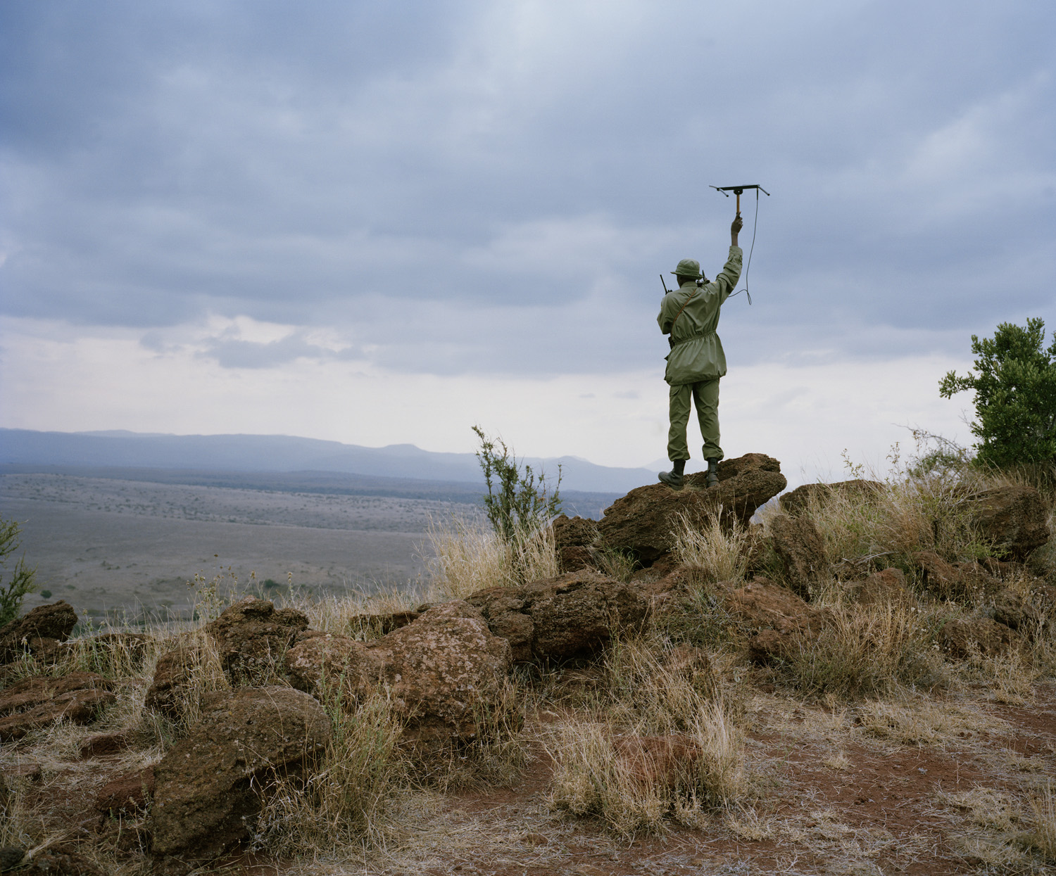 Monitoring a lion's movements in the Lewa Wildlife Conservancy, northern Kenya.