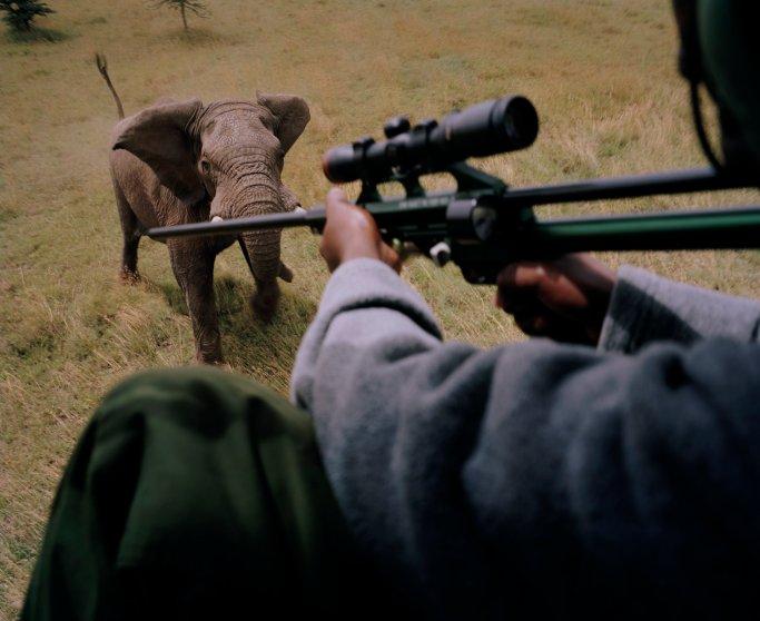 DC 258.46 001 darting elephant, ol pejeta conservancy, northern