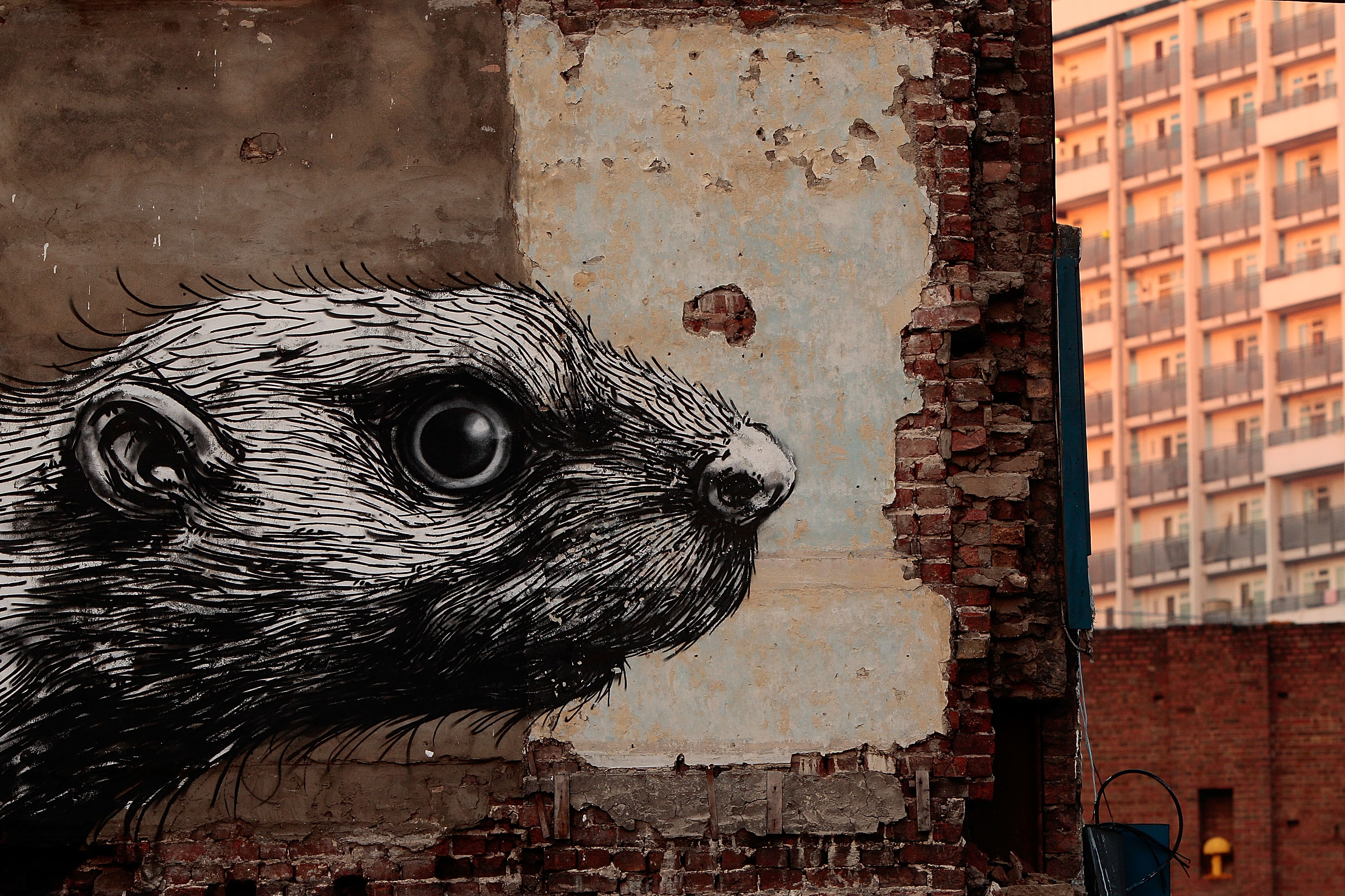 A piece of Roa's rodent series in the East End of London, Nov. 15, 2011.