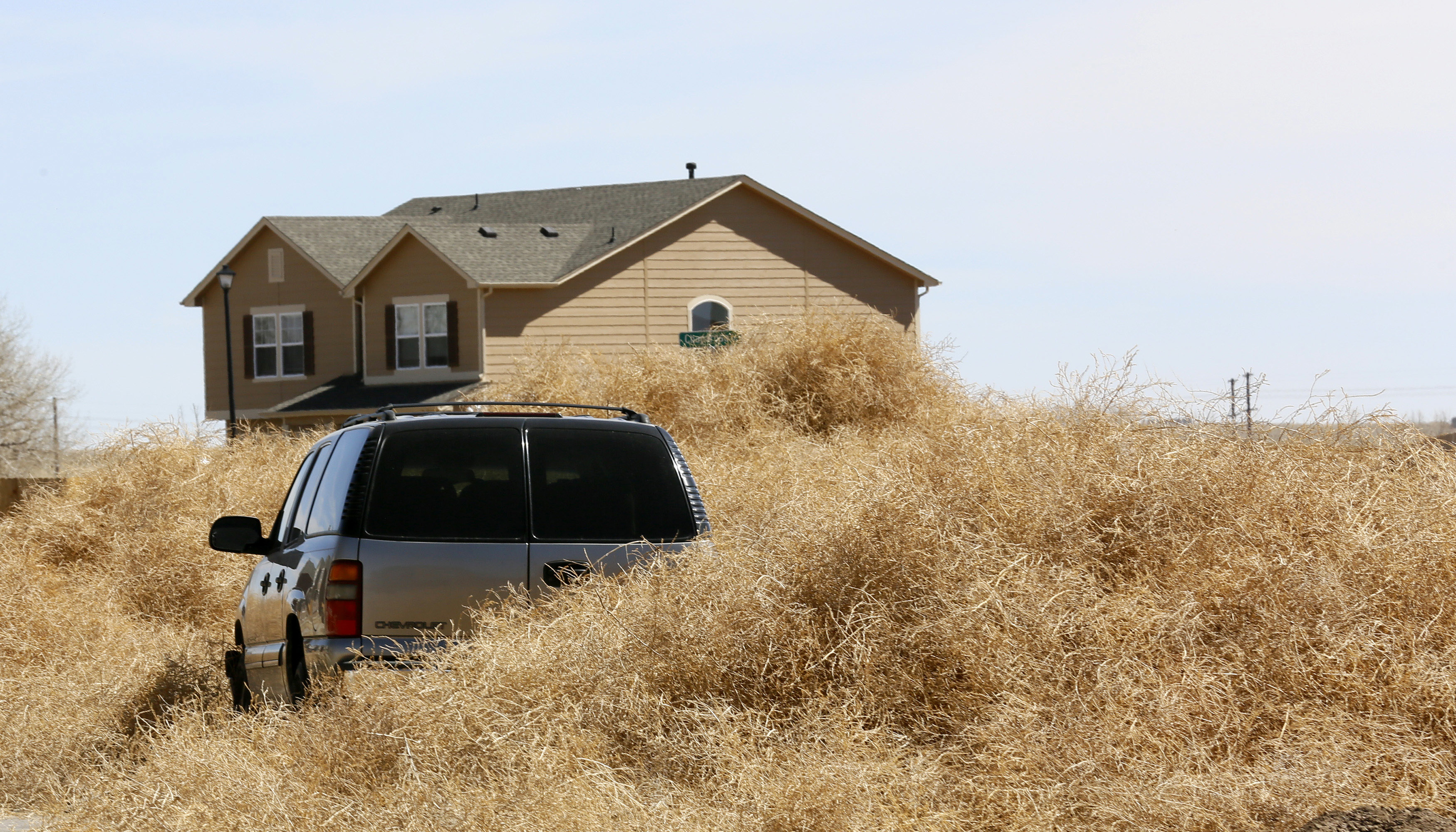 Tumbleweed surrounds a car in Fountain, Colorado March 20, 2014.