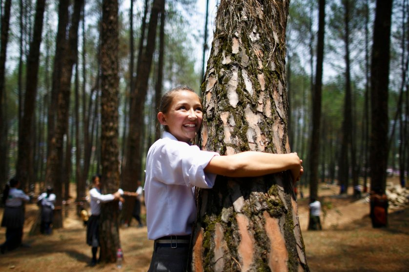 Girl hugs a tree as she takes part in an attempt to break the Guinness World Record for the most number of people hugging trees for two minutes in Kathmandu