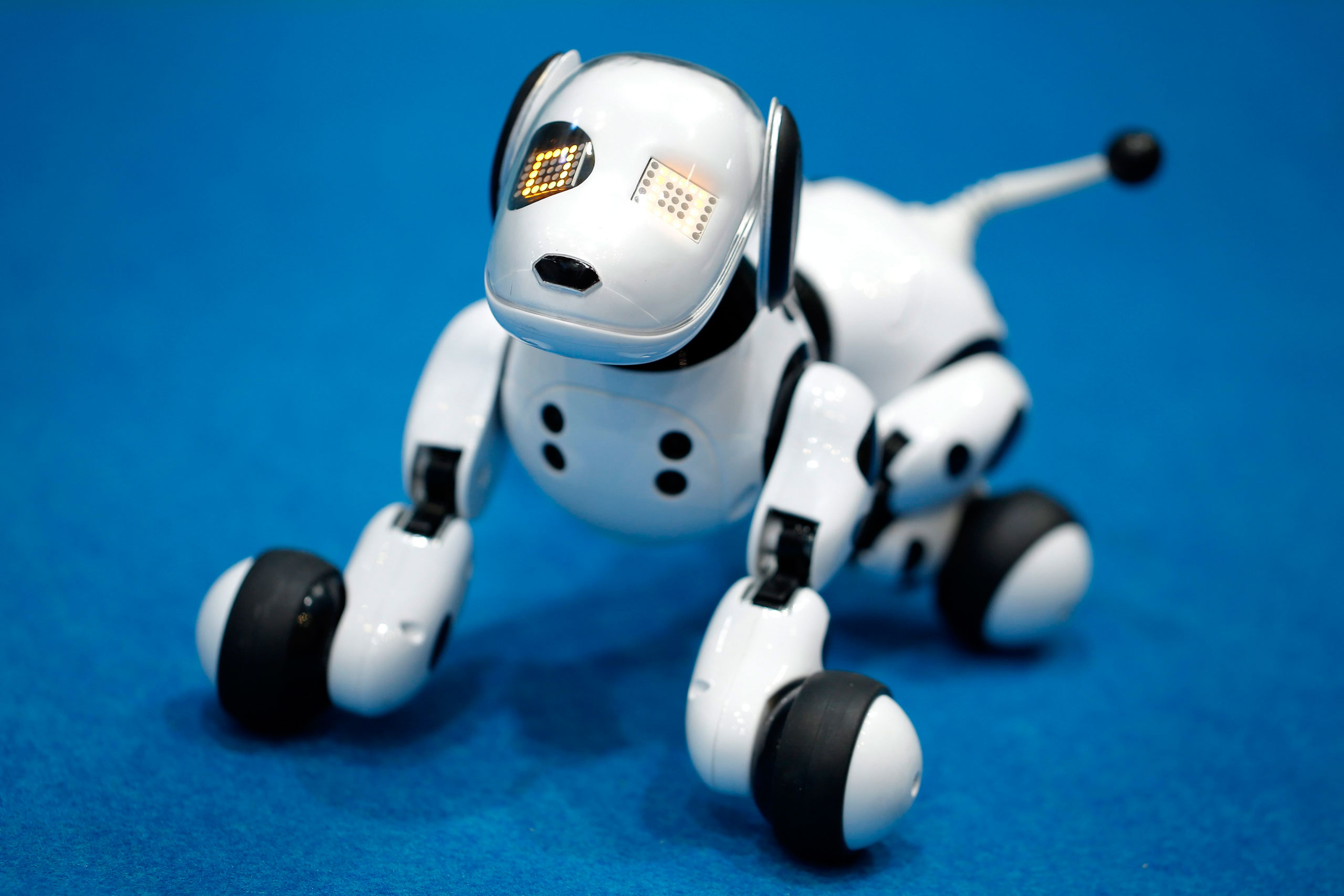 'Hello! Zoomer' a robotic dog, can recognize over 45 English and Japanese words.