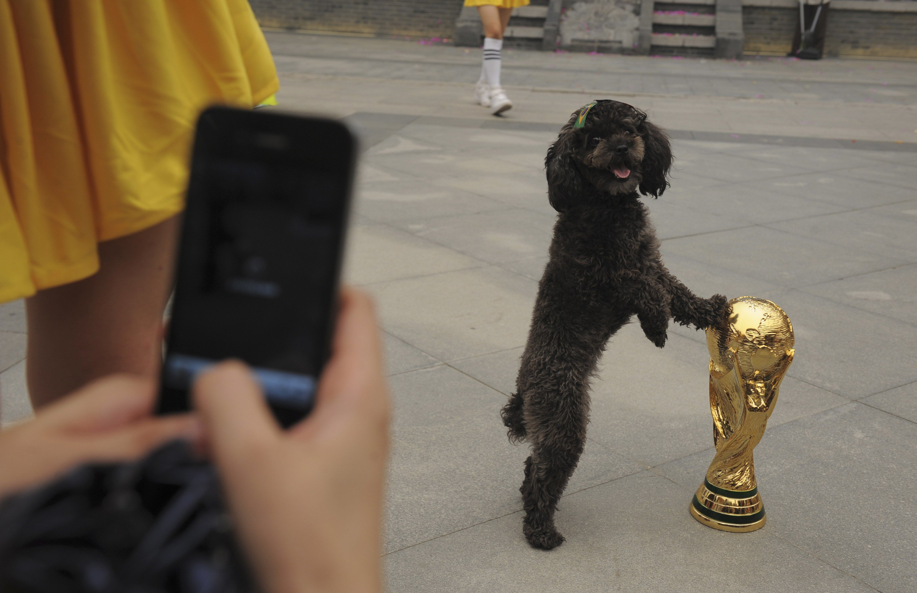 A dog with a Brazilian flag sticker on its head, touches a replica of the World Cup trophy as a visitor takes pictures during an event to celebrate the upcoming 2014 World Cup in Brazil, in Wuhan, Hubei province, China on June 12, 2014.