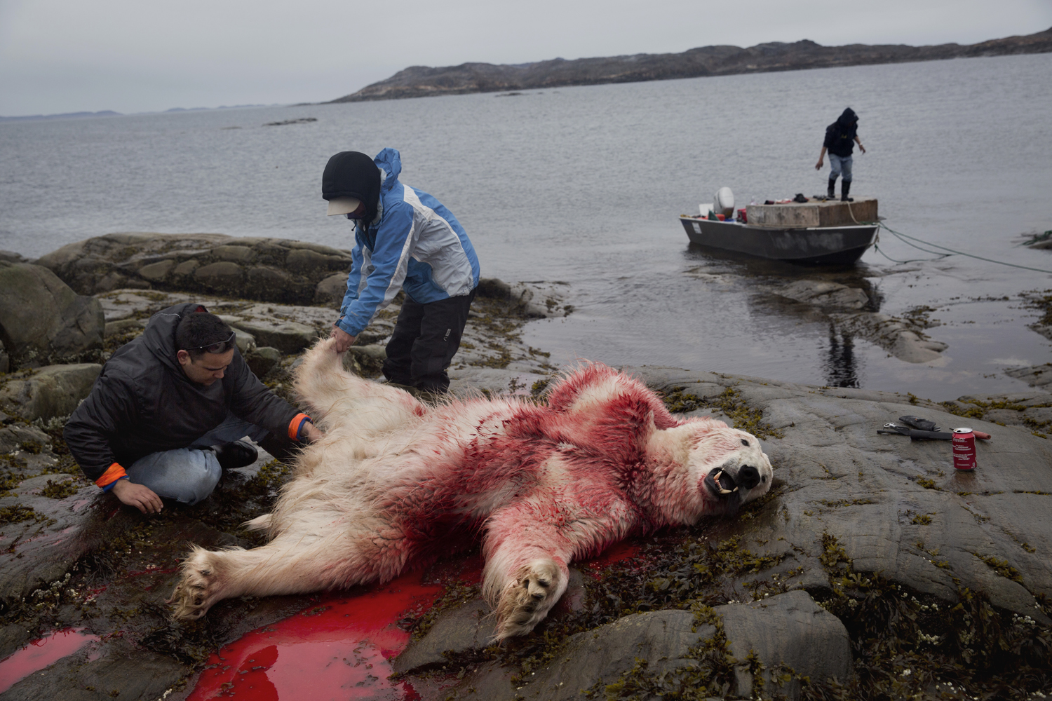 Baffin Island, Sept. 5, 2013. Inuit hunters Leesee Papatsie (left) and Peterloosie Ninna Papatsie stand over the body of a polar bear they shot to death moments earlier.