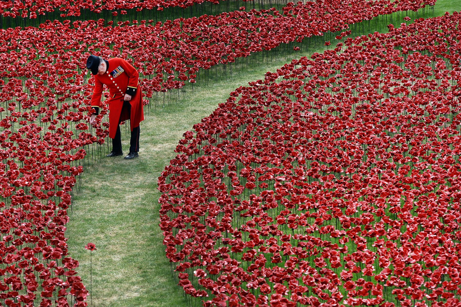 Aug. 1, 2014.  A bemedalled Chelsea Pensioner walks amongst red poppies in the moat at the Tower of London in London, Britain.
