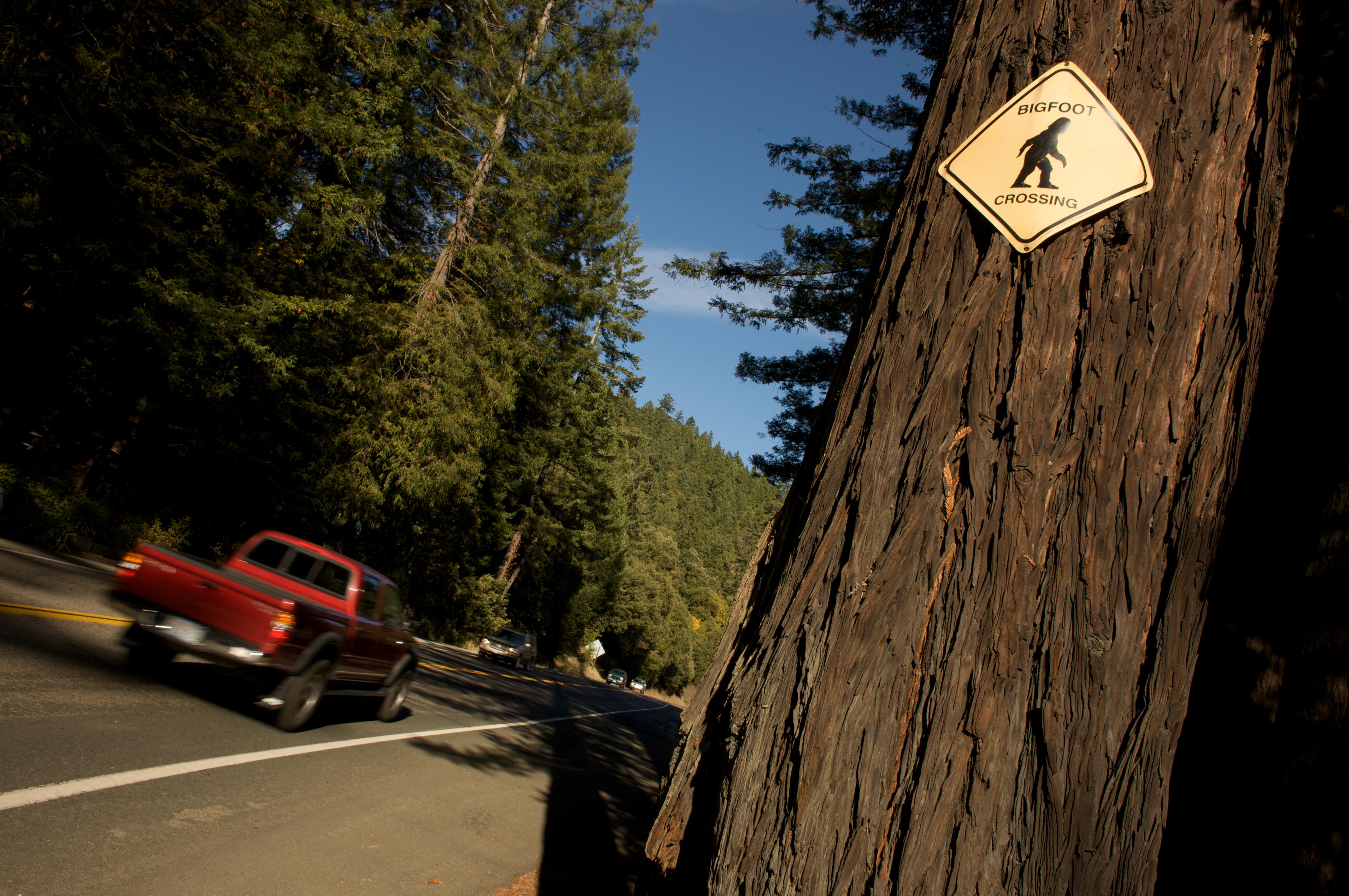 Legend of Bigfoot roadside attraction outside Richardson State Park, Calif.