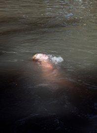 John Francis Peters, The Stream