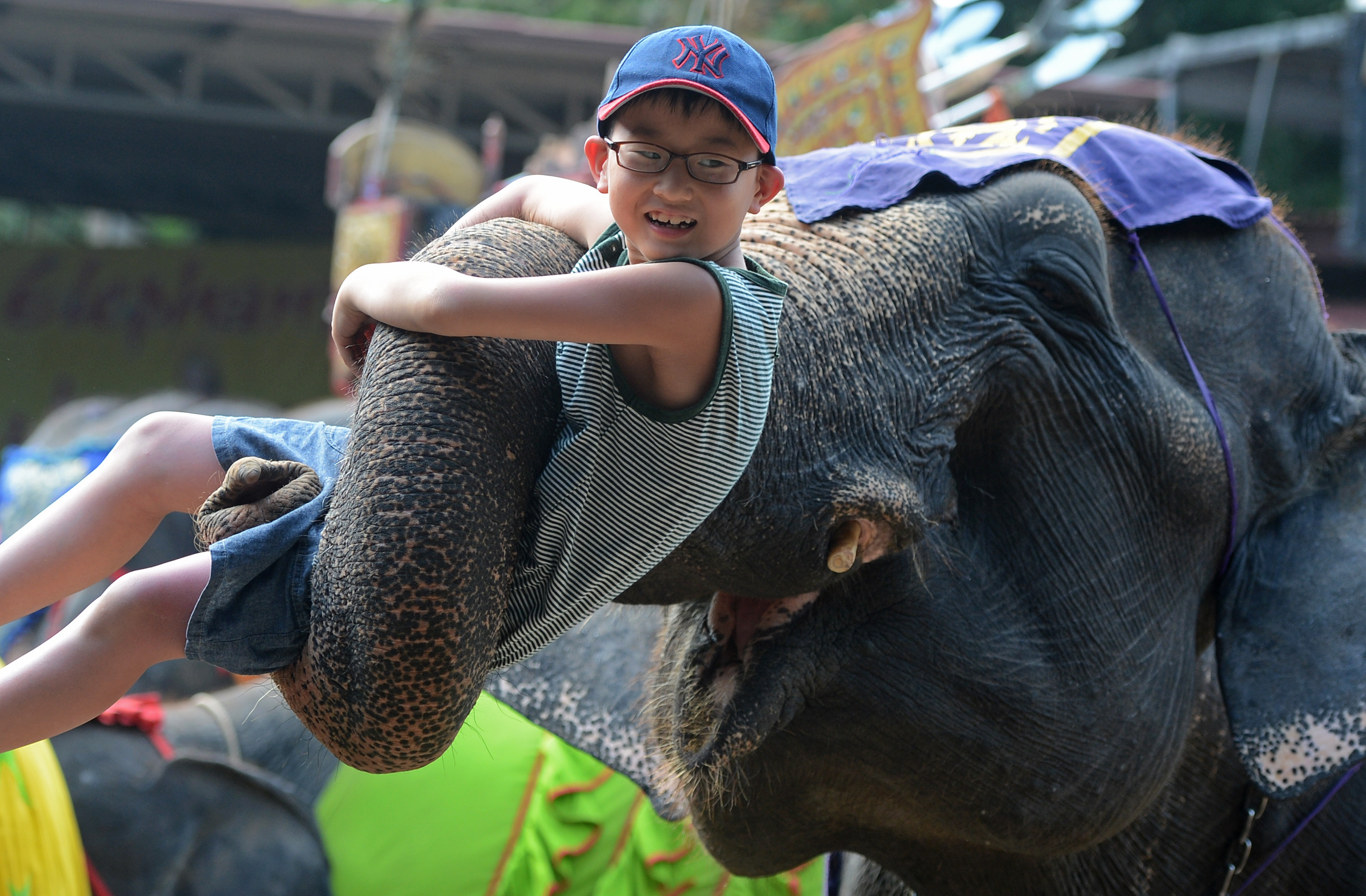 An elephant lifts a tourist during a show in Pattaya, Thailand on March 1, 2013.