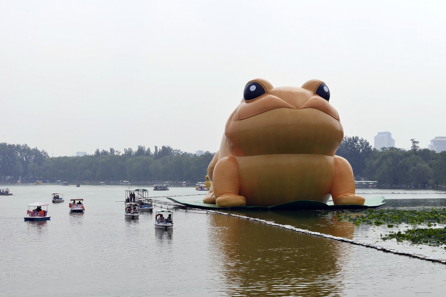 A giant inflatable toad is seen floating on a lake at the Yuyuantan Park in Beijing, July 19, 2014.