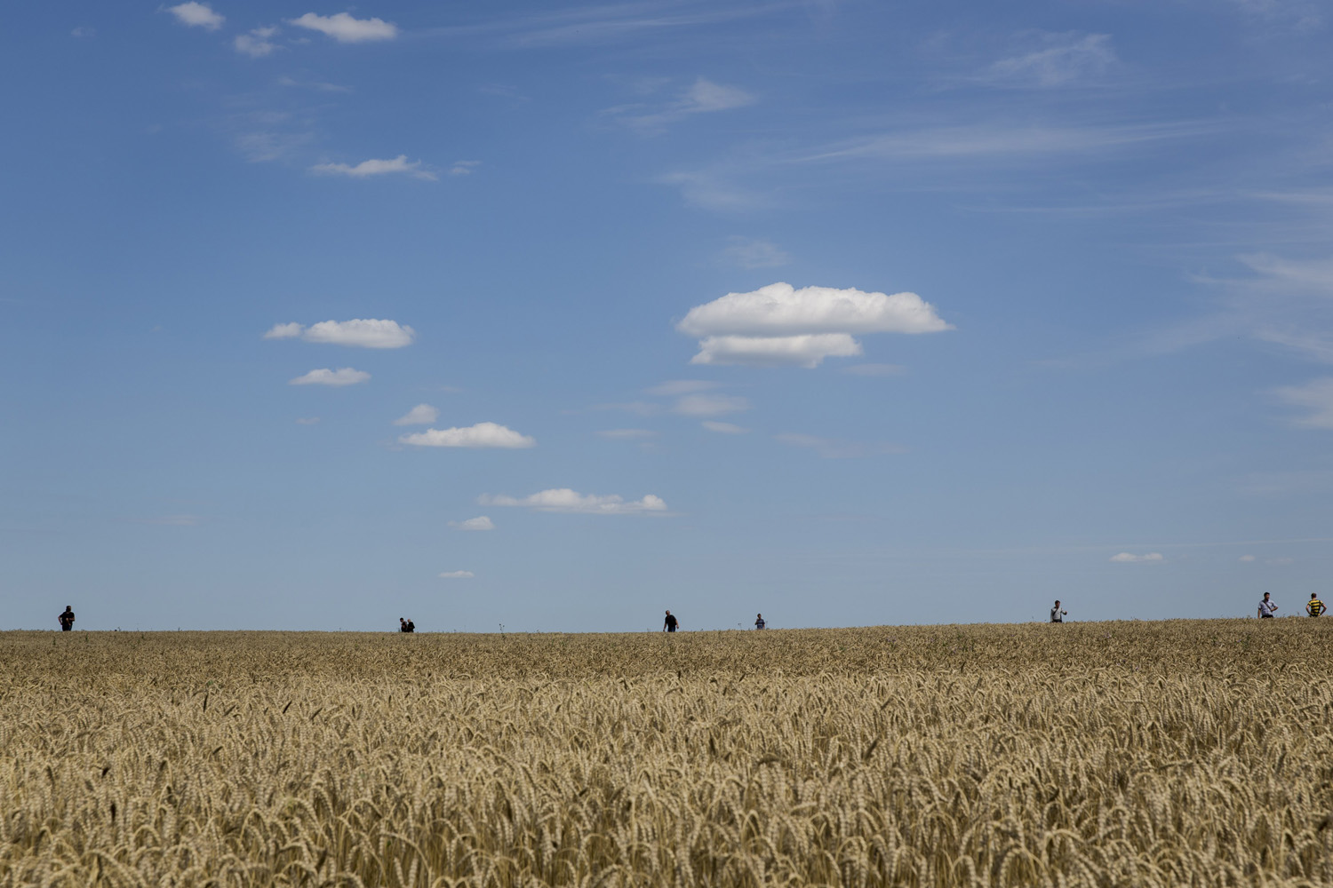 Jul. 20, 2014.  Volunteers look for wreckage from Malaysia Airlines flight MH17 in a wheat field in Grabovo, Ukraine.