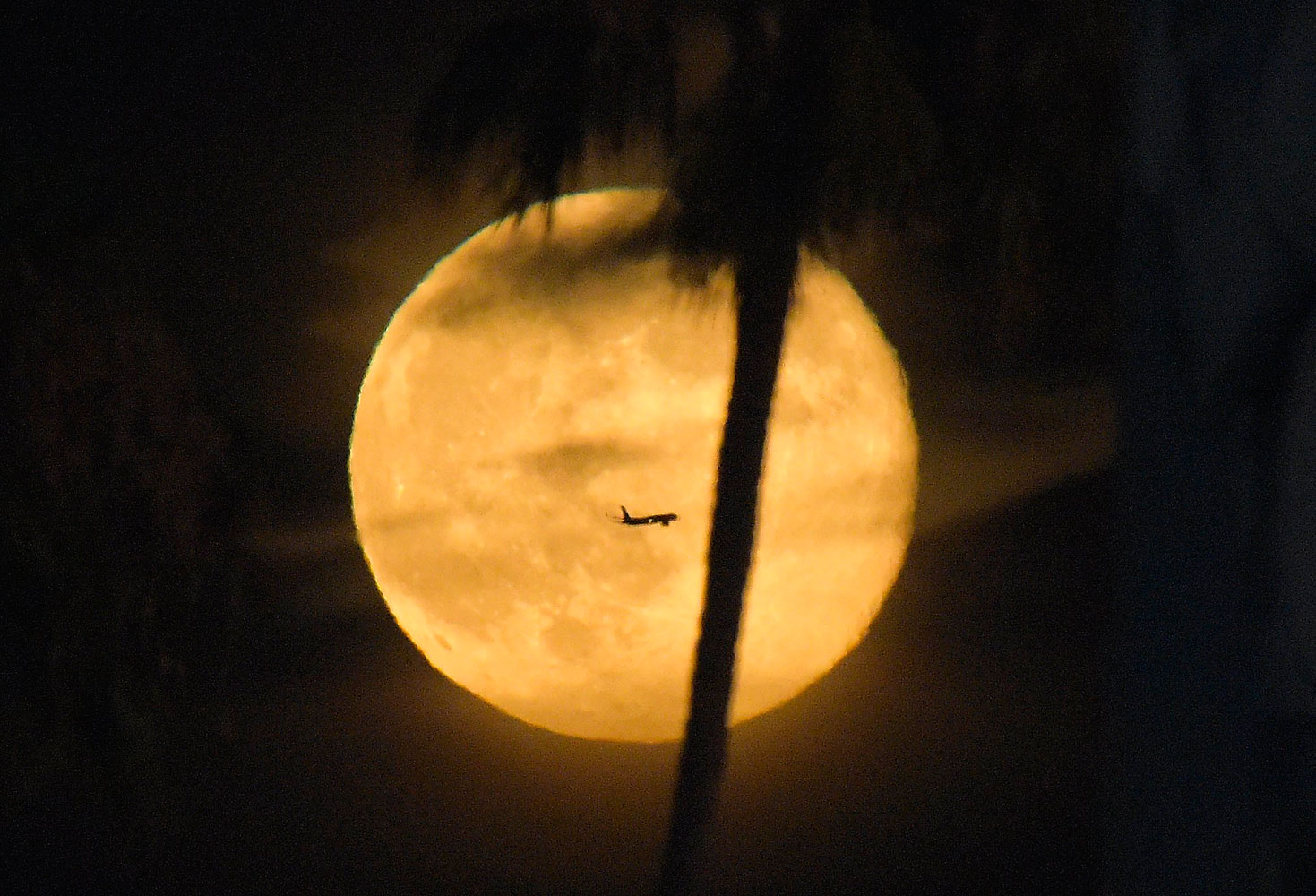 A plane flies pasts a supermoon as a palm tree grows in the foreground during a baseball game between the Los Angeles Dodgers and the San Diego Padres at Dodger Stadium, July 12, 2014, in Los Angeles.