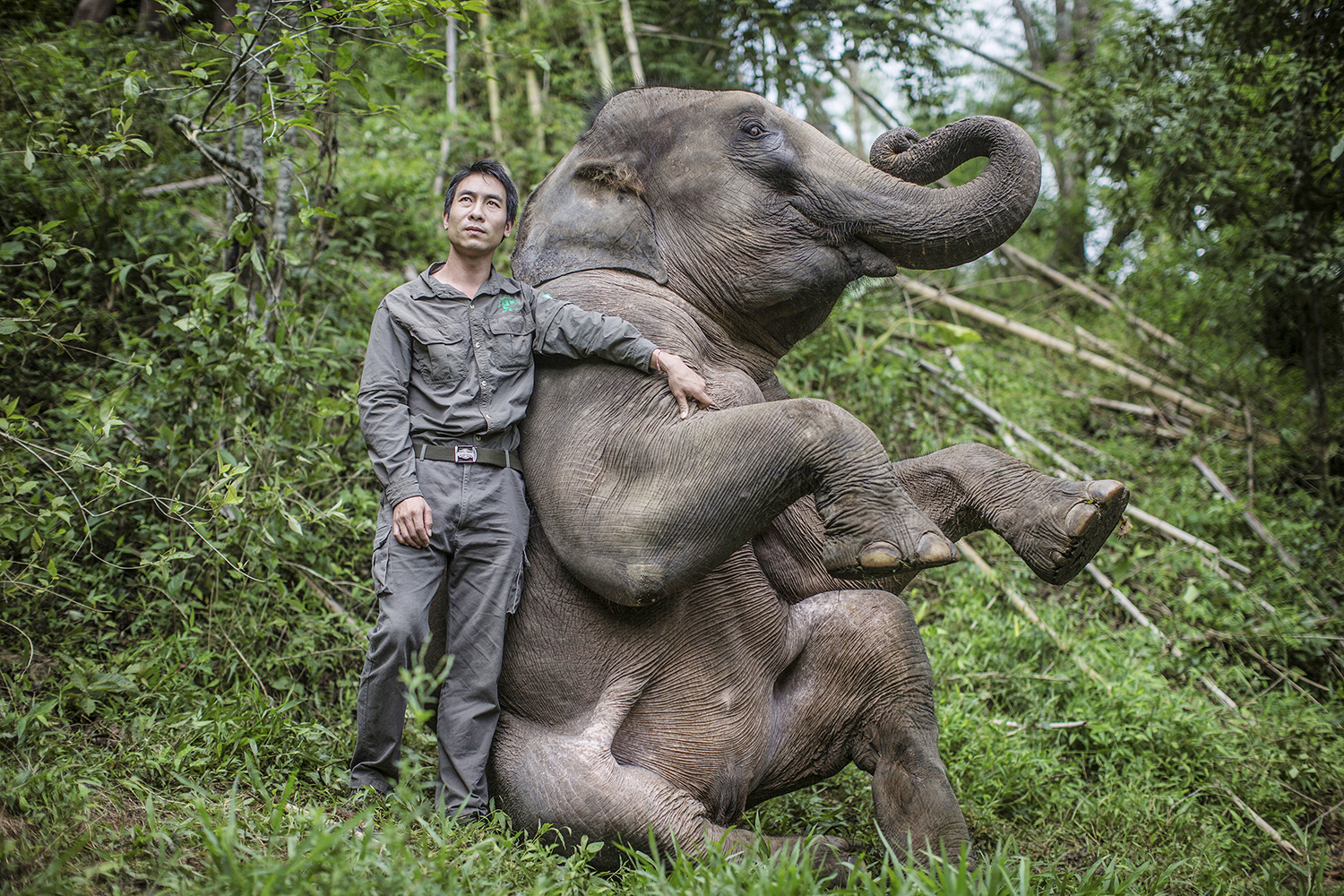 Xiong Chaoyong of the local Asian elephant breeding center poses with a wild elephant in the Wild Elephant Valley in Jinghong city, Xishuangbanna Dai Autonomous Prefecture, southwest China's Yunnan province, 21 June 2014.