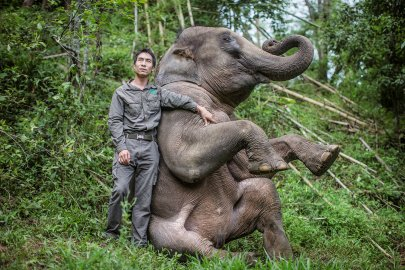 Wild elephants find a safe haven that values ivory