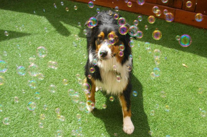 Bacon-Bubbles