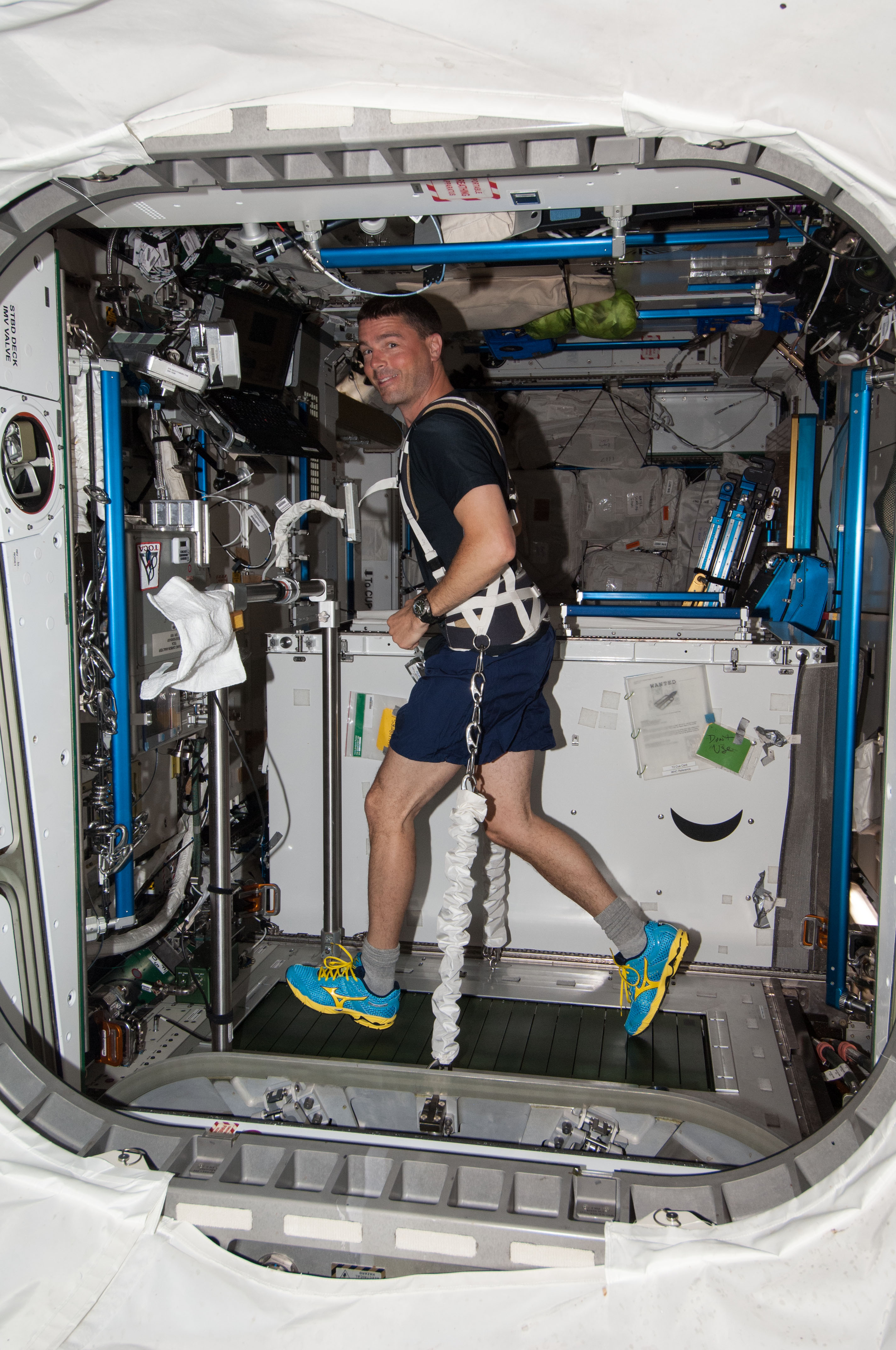 Astronaut Reid Wiseman, equipped with a bungee harness, exercises on the Combined Operational Load Bearing External Resistance Treadmill (COLBERT) in the Tranquility node of the International Space Station.
