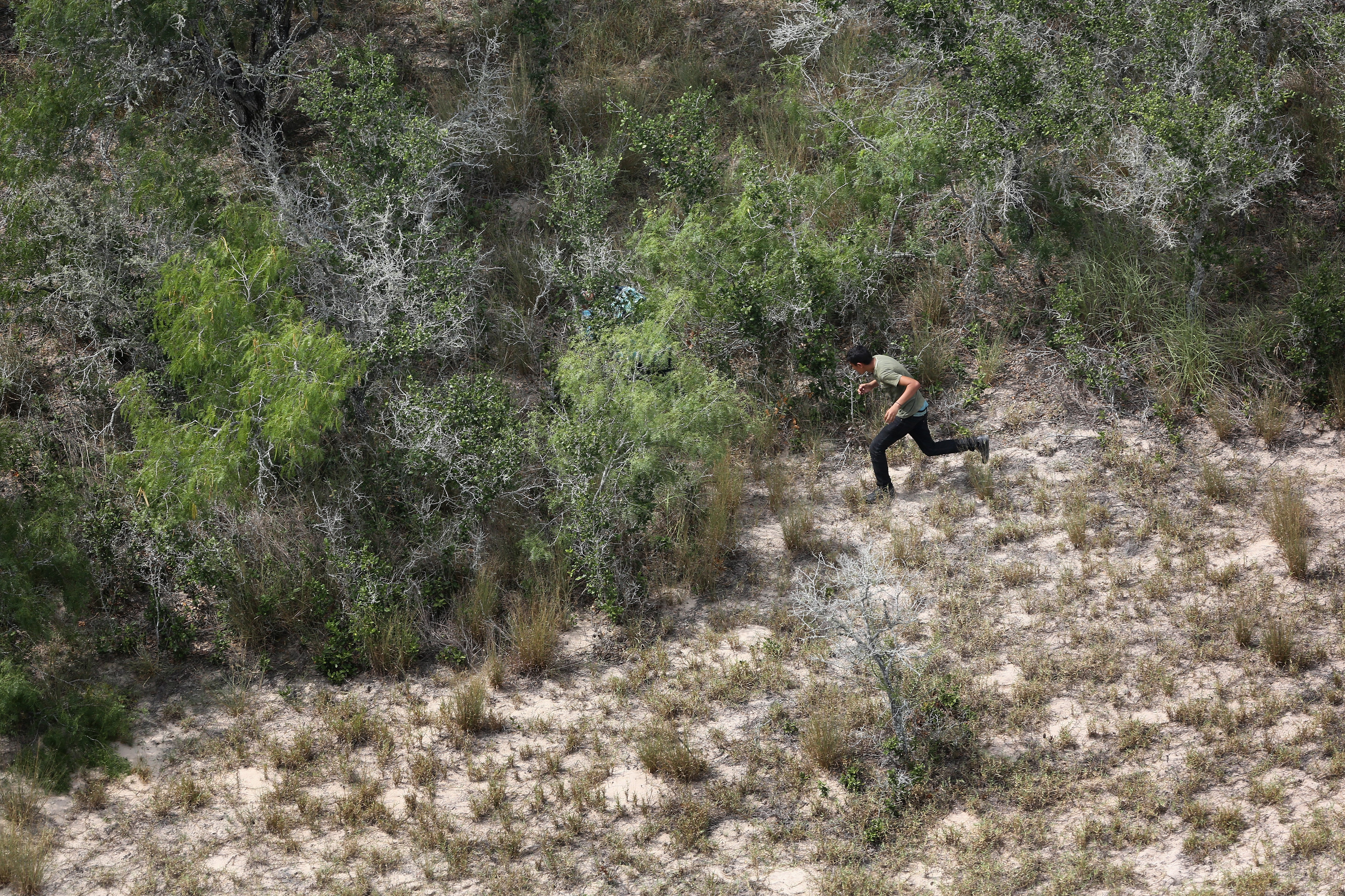 Undocumented immigrants flee into dense brush from U.S. Customs and Border Protection agents some 60 miles north of the U.S.-Mexico border in Brooks County, Texas on July 23, 2014.