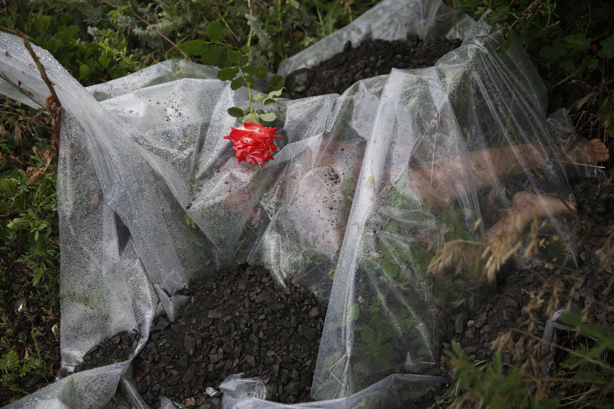 A rose lies on a plastic sheet covering a victim of a Malaysia Airlines Boeing 777 plane which was downed on Thursday near the village of Rozsypne, in the Donetsk region July 18, 2014.