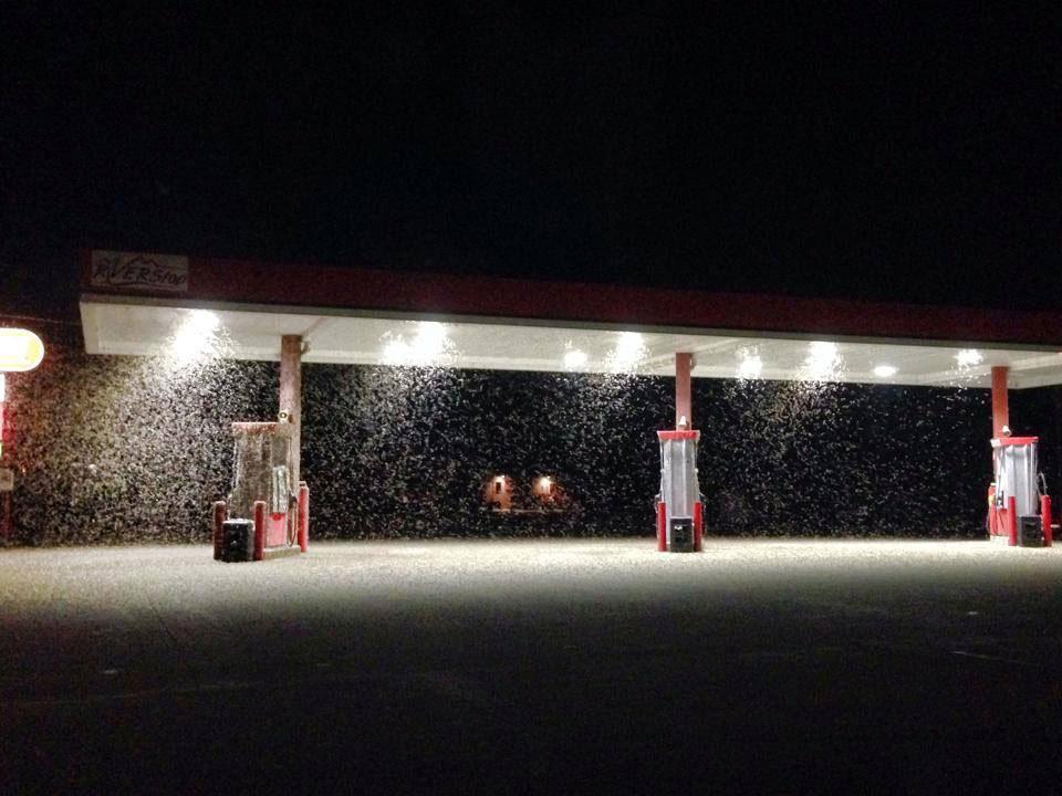 Massive Mayfly emergence at La Crosse in Minnesota Ciy, Wis. on July 20, 2014.